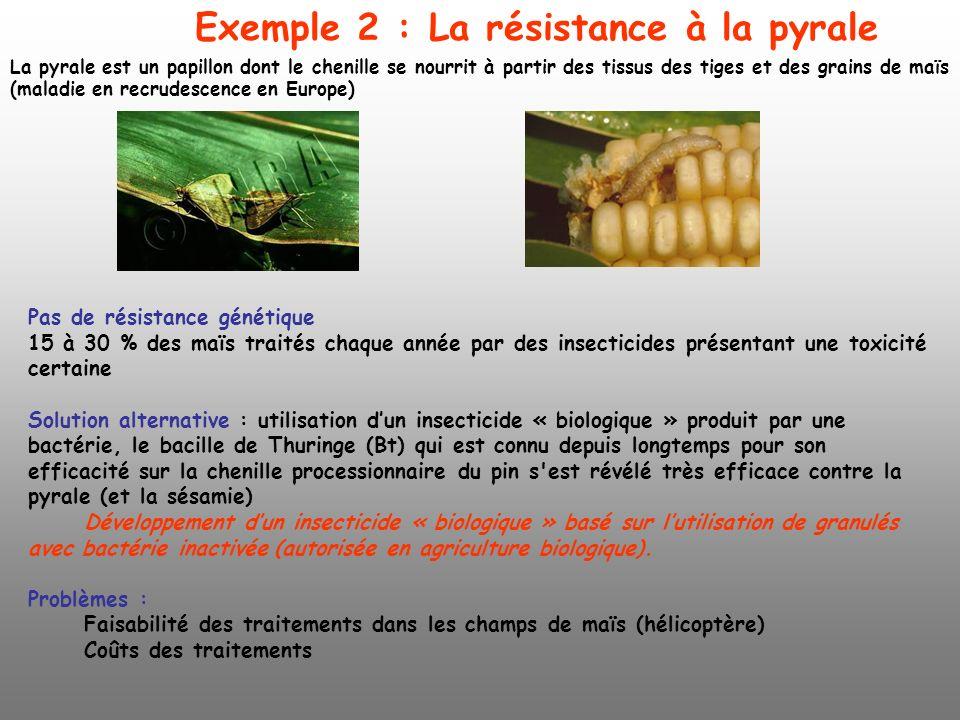 La pyrale est un papillon dont le chenille se nourrit à partir des tissus des tiges et des grains de maïs (maladie en recrudescence en Europe) Pas de