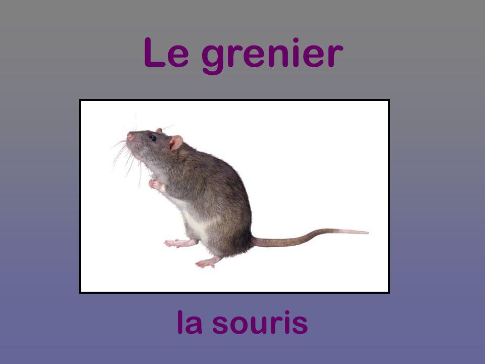 Le grenier la souris