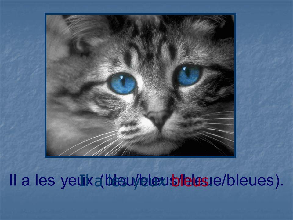 Il a les yeux (bleu/bleus/bleue/bleues). Il a les yeux bleus.