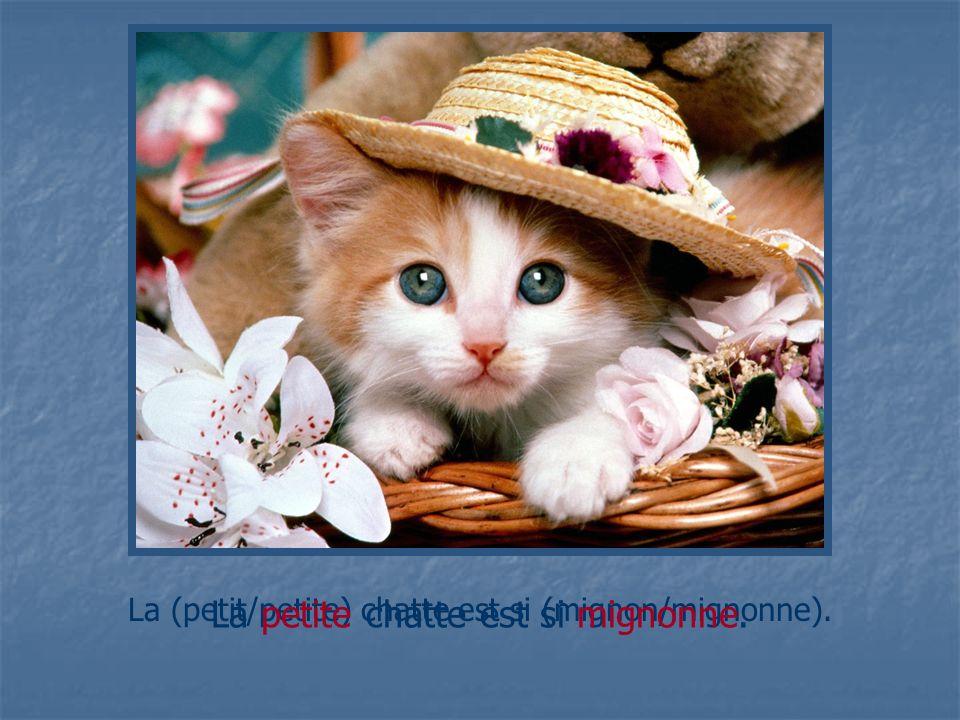 La (petit/petite) chatte est si (mignon/mignonne). La petite chatte est si mignonne.