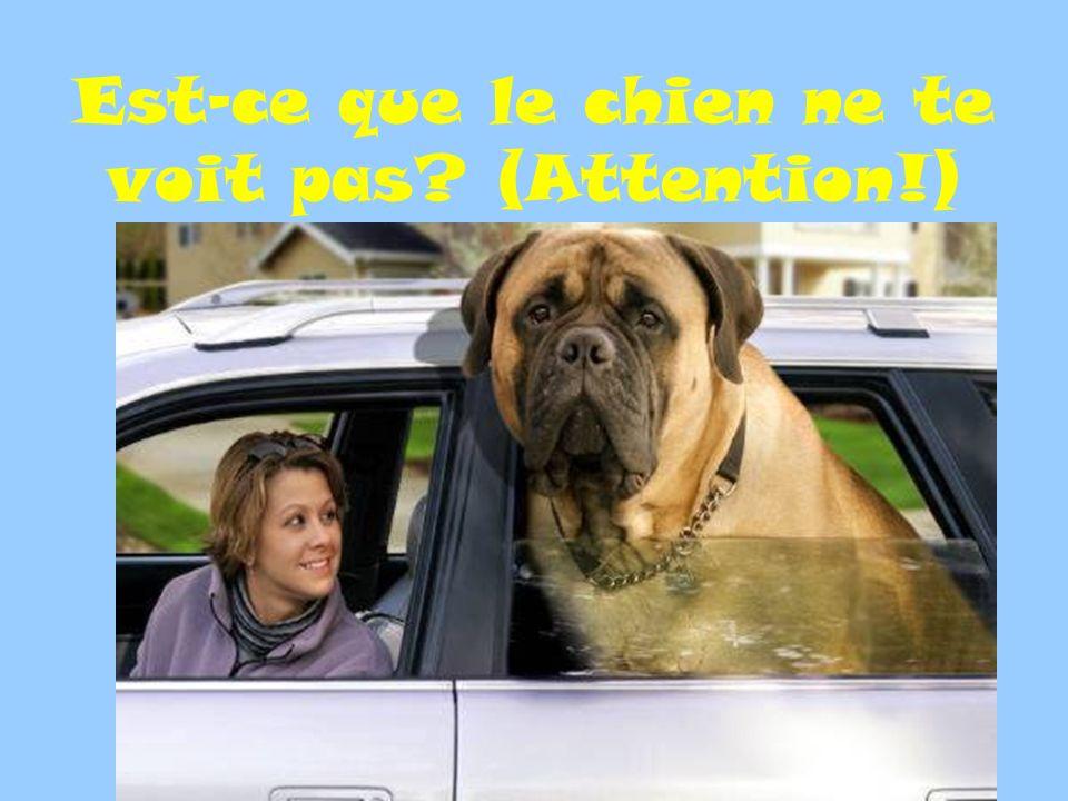 Est-ce que le chien ne te voit pas? (Attention!)