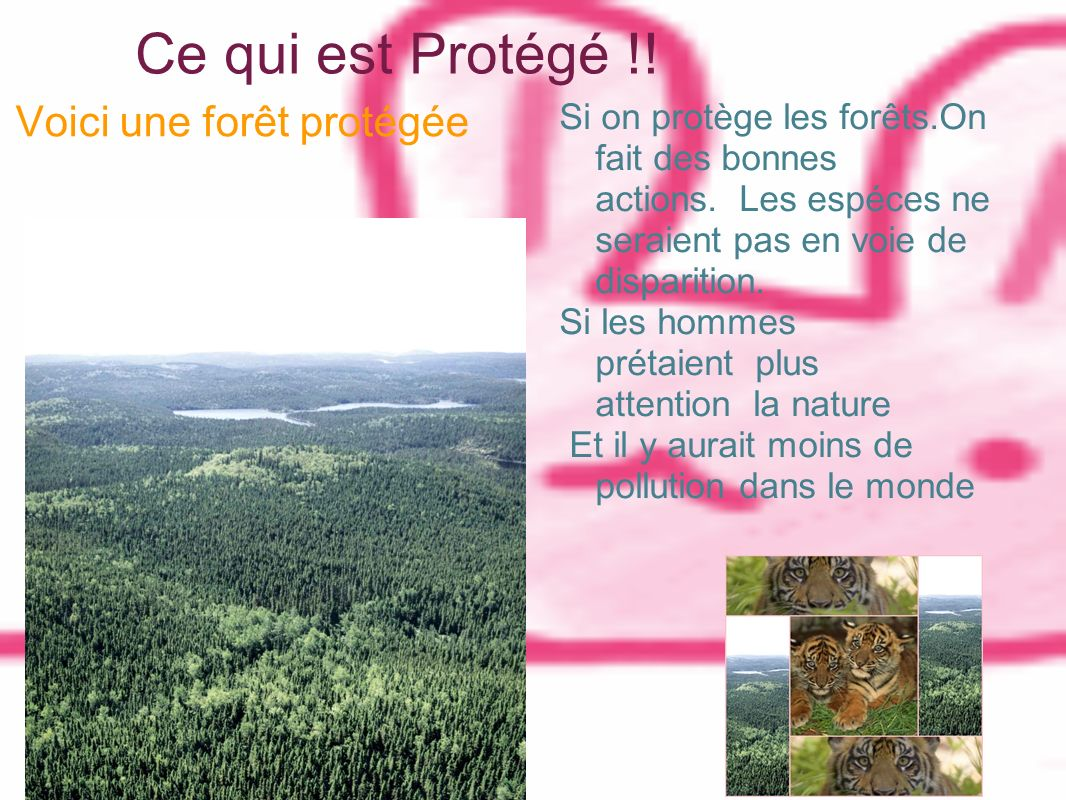 Ce qui est Protégé !! Voici une forêt protégée Si on protège les forêts.On fait des bonnes actions. Les espéces ne seraient pas en voie de disparition