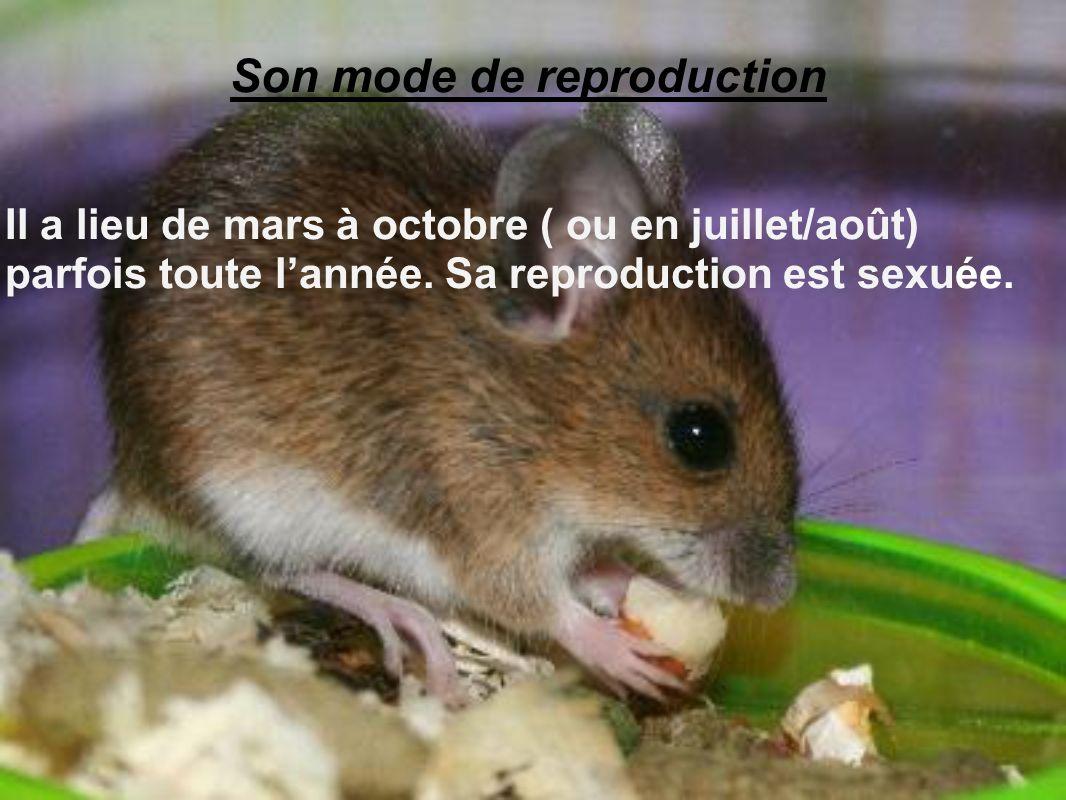 Son mode de reproduction Il a lieu de mars à octobre ( ou en juillet/août) parfois toute lannée. Sa reproduction est sexuée.