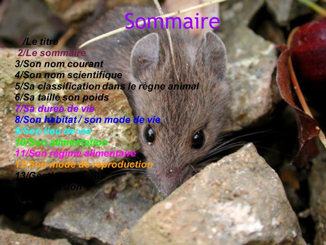 Sommaire 1/Le titre 2/Le sommaire 3/Son nom courant 4/Son nom scientifique 5/Sa classification dans le règne animal 6/Sa taille son poids 7/Sa durée d