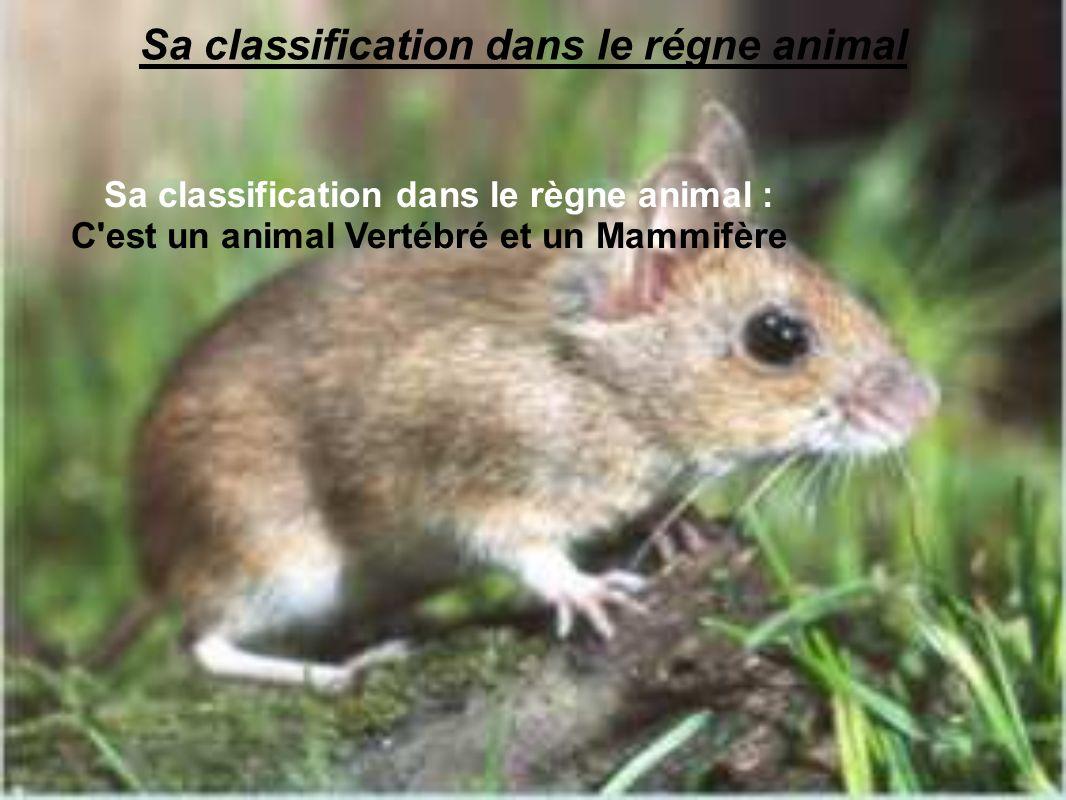Sa classification dans le régne animal Sa classification dans le règne animal : C'est un animal Vertébré et un Mammifère