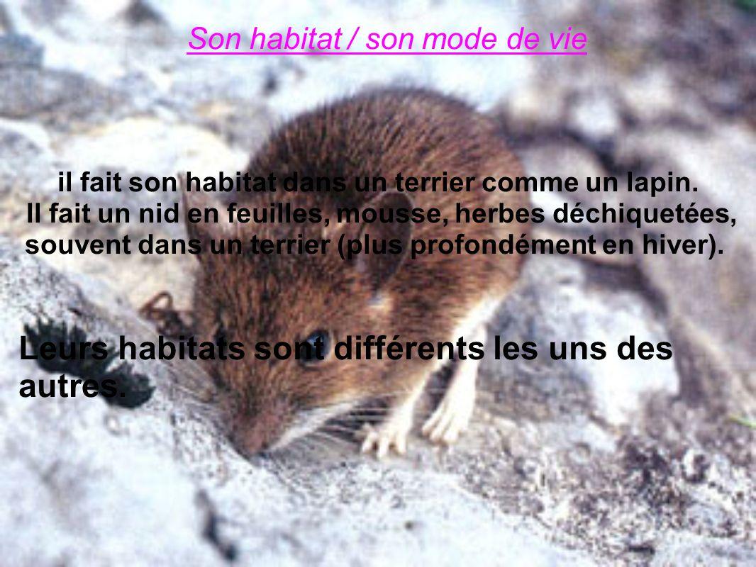 Son habitat / son mode de vie il fait son habitat dans un terrier comme un lapin. Il fait un nid en feuilles, mousse, herbes déchiquetées, souvent dan