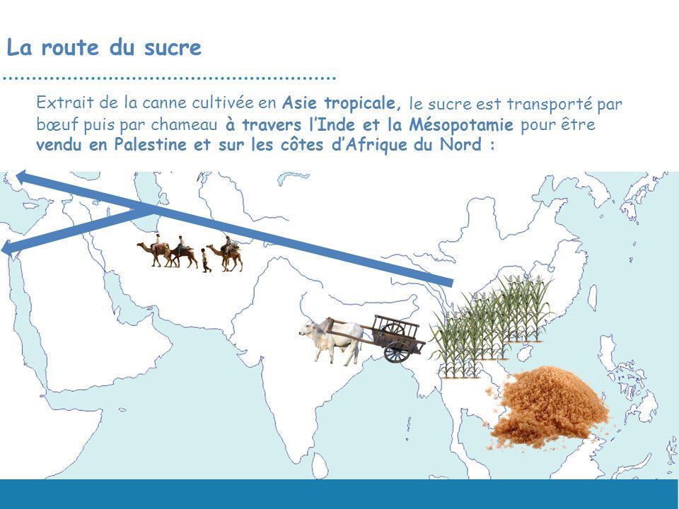 Extrait de la canne cultivée en Asie tropicale, le sucre est transporté par bœuf puis par chameau à travers lInde et la Mésopotamie pour être vendu en