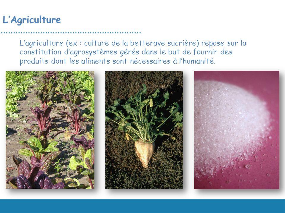 LAgriculture Lagriculture (ex : culture de la betterave sucrière) repose sur la constitution dagrosystèmes gérés dans le but de fournir des produits d