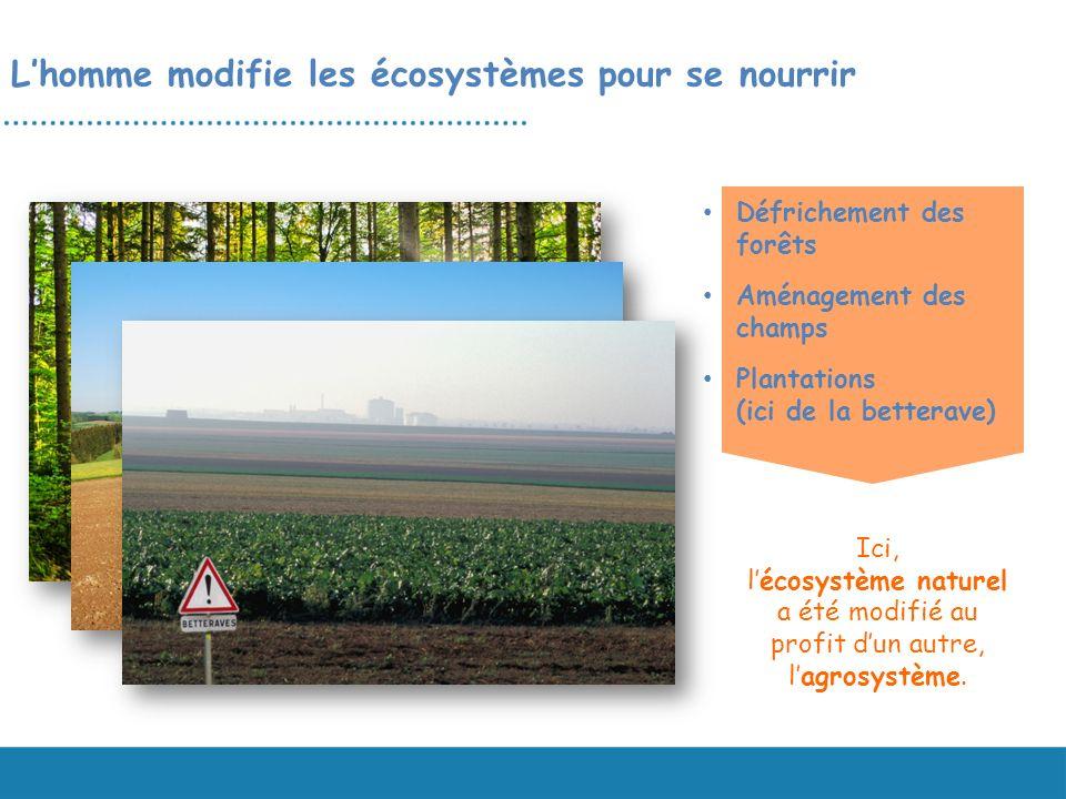Lhomme modifie les écosystèmes pour se nourrir Ici, lécosystème naturel a été modifié au profit dun autre, lagrosystème. Défrichement des forêts Aména