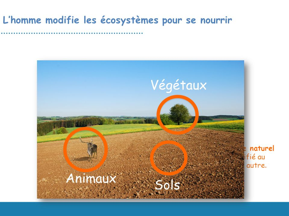 Lhomme modifie les écosystèmes pour se nourrir Lécosystème naturel a été modifié au profit dun autre. Sols Animaux Végétaux