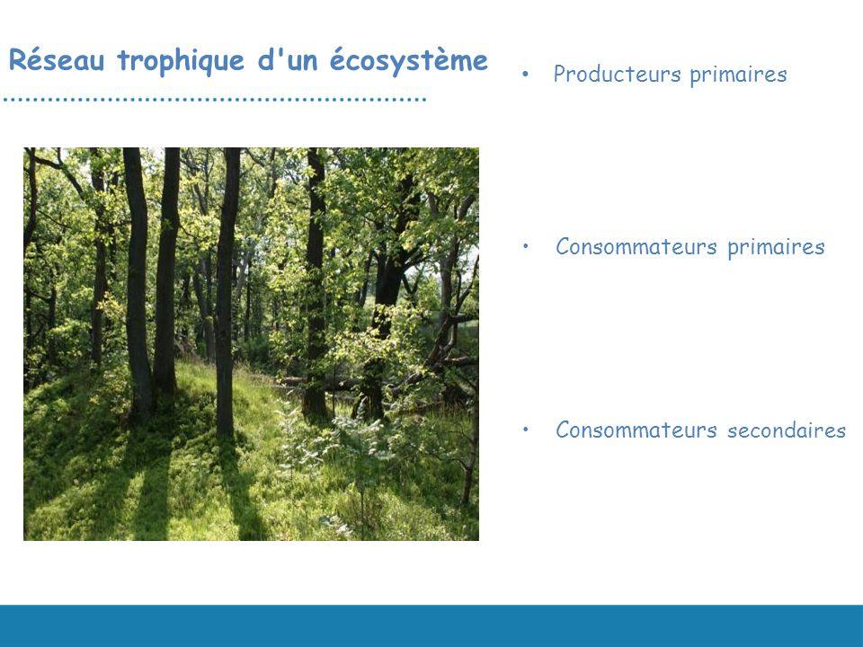 Réseau trophique d'un écosystème Consommateurs secondaires Producteurs primaires Consommateurs primaires