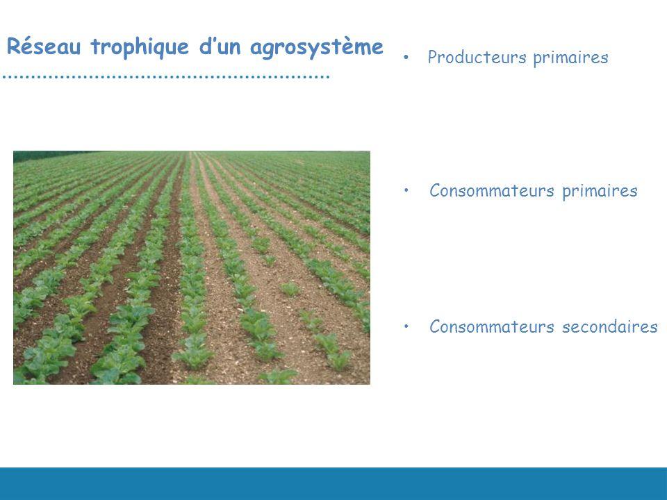 Consommateurs secondaires Réseau trophique dun agrosystème Producteurs primaires Consommateurs primaires
