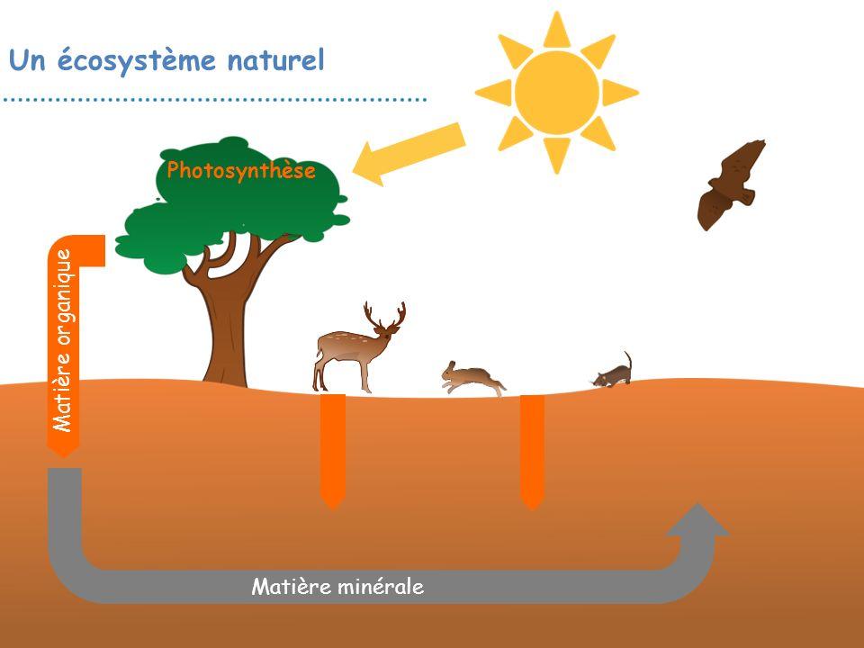 Photosynthèse Un écosystème naturel Matière organique Matière minérale