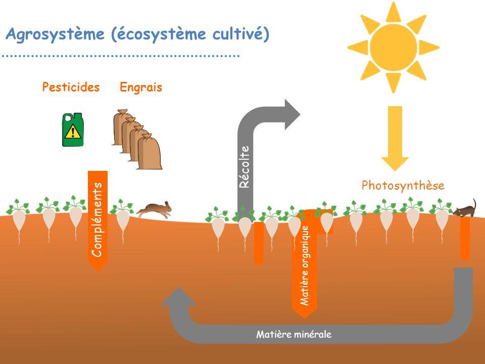 Agrosystème (écosystème cultivé) Matière organique EngraisPesticides Photosynthèse Compléments Récolte Matière minérale