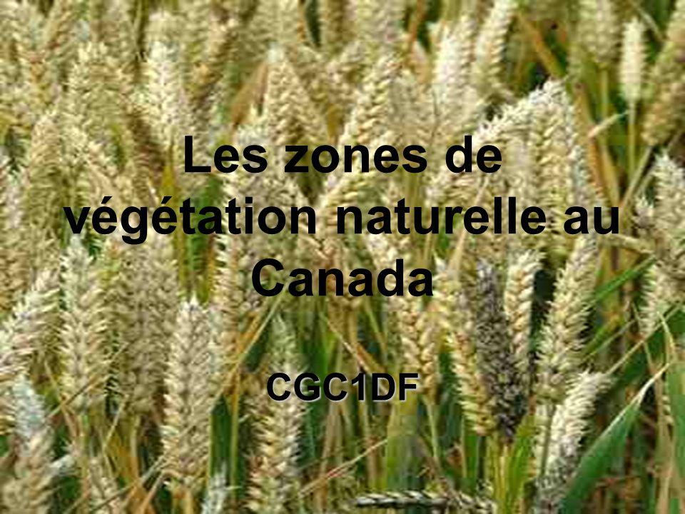 Zones de végétation au Canada Toundra Foret de la cote ouest Végétation de la cordillère Foret boréale et taïga Prairies Forets mixte Foret feuillus (ou a feuilles caduques)