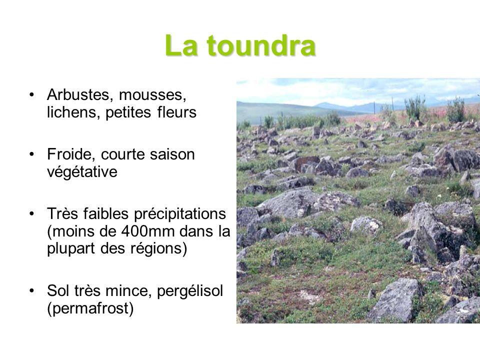 La toundra Arbustes, mousses, lichens, petites fleurs Froide, courte saison végétative Très faibles précipitations (moins de 400mm dans la plupart des régions) Sol très mince, pergélisol (permafrost)