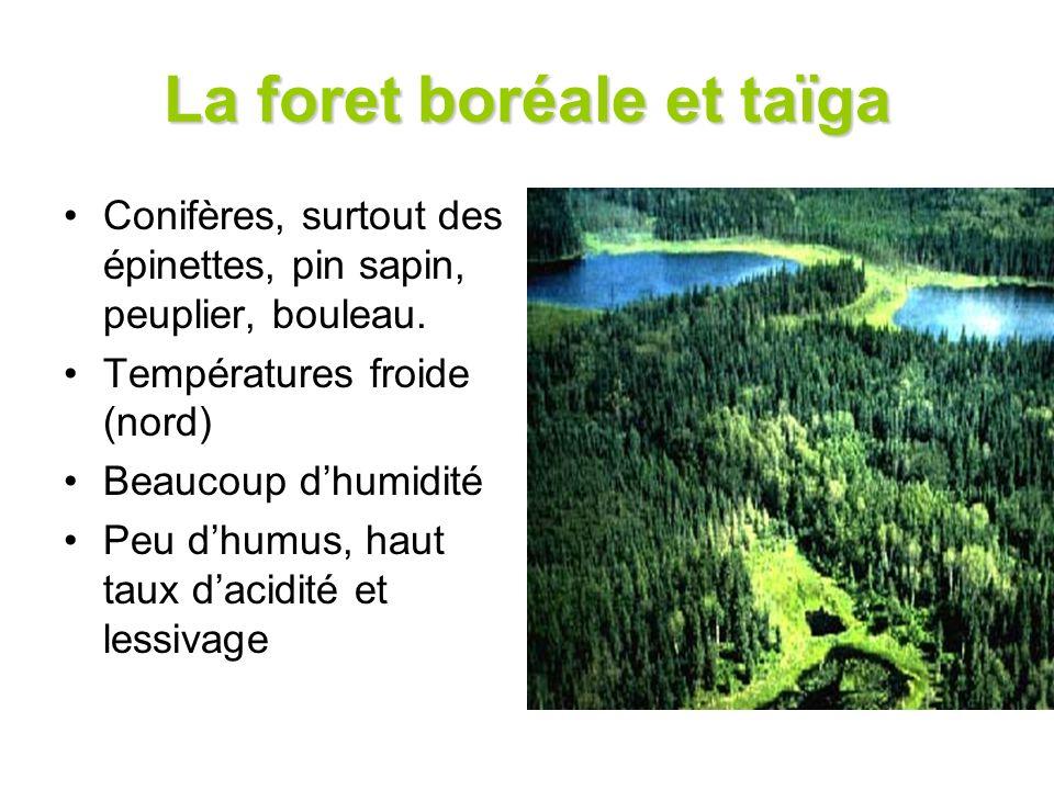 La foret boréale et taïga Conifères, surtout des épinettes, pin sapin, peuplier, bouleau. Températures froide (nord) Beaucoup dhumidité Peu dhumus, ha