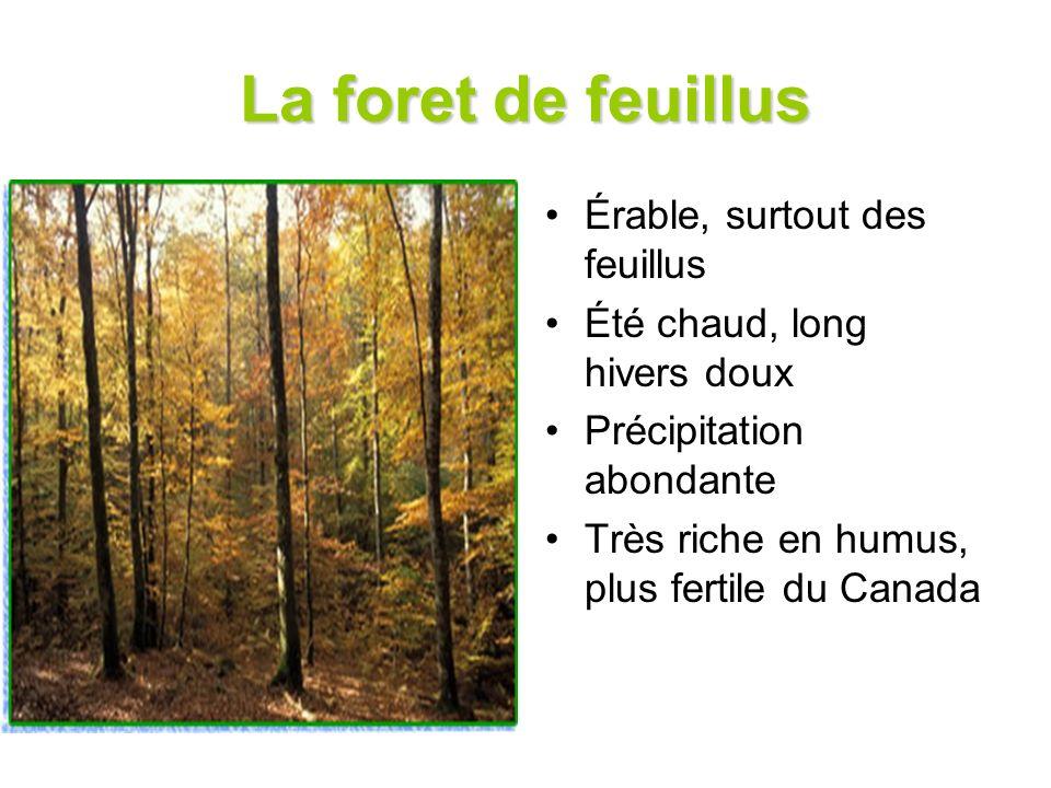 La foret de feuillus Érable, surtout des feuillus Été chaud, long hivers doux Précipitation abondante Très riche en humus, plus fertile du Canada