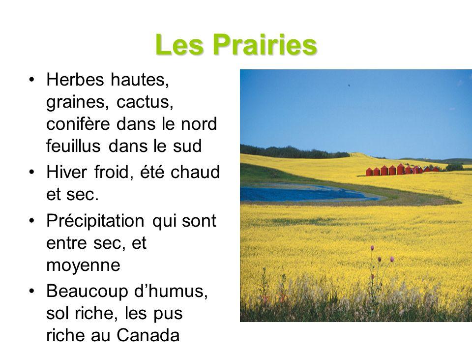 Les Prairies Herbes hautes, graines, cactus, conifère dans le nord feuillus dans le sud Hiver froid, été chaud et sec. Précipitation qui sont entre se