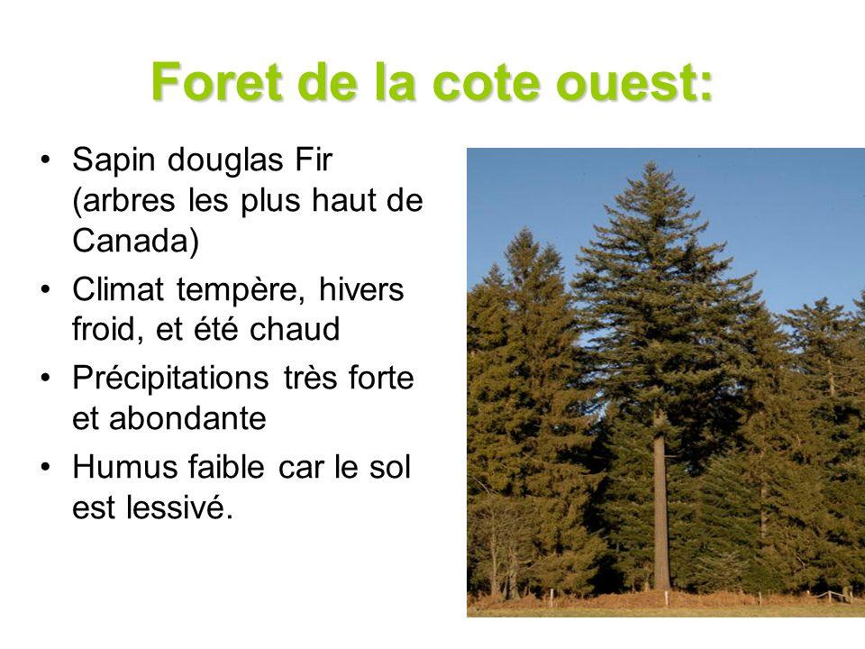 Foret de la cote ouest: Sapin douglas Fir (arbres les plus haut de Canada) Climat tempère, hivers froid, et été chaud Précipitations très forte et abo