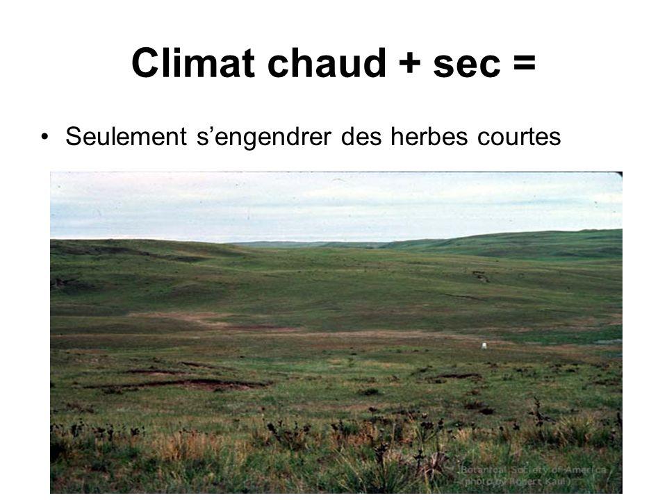 Climat chaud + sec = Seulement sengendrer des herbes courtes