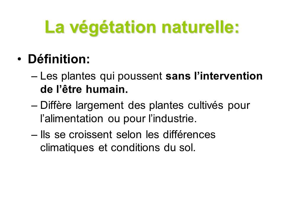 La végétation naturelle: Définition: –Les plantes qui poussent sans lintervention de lêtre humain. –Diffère largement des plantes cultivés pour lalime