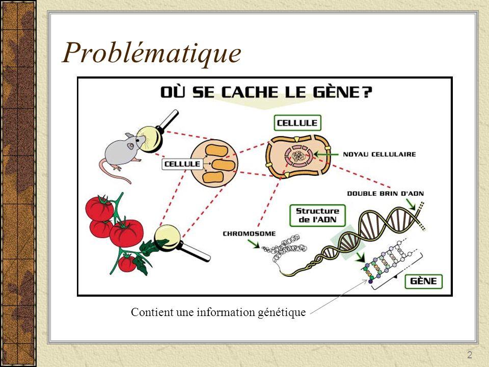 Problématique 3 Transcription Traduction Protéines régulatrices Mes yeux sont de couleur noires