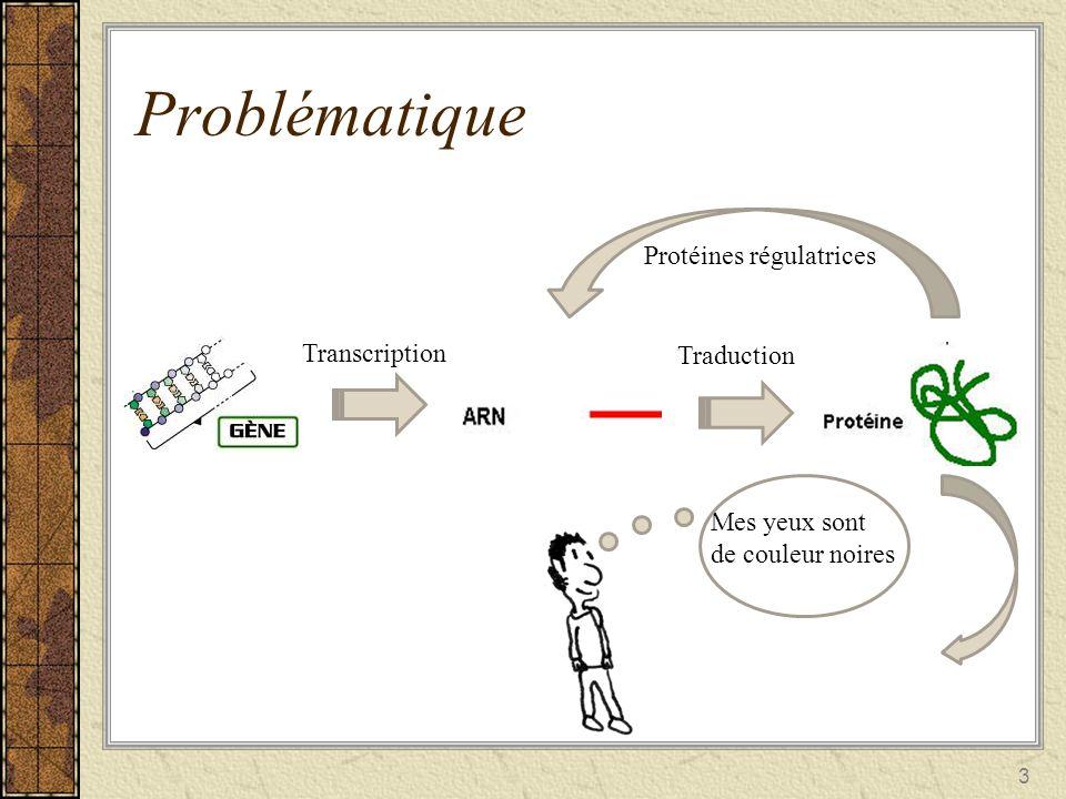 4 Problématique Il y a un échange dinformations entre les gènes réseau génétique Lidentification et la modélisation du réseau génétique nous permet de prédire le comportement des gènes.