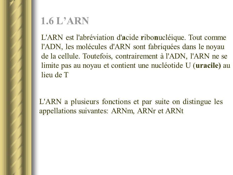 1.6 LARN L'ARN est l'abréviation d'acide ribonucléique. Tout comme l'ADN, les molécules d'ARN sont fabriquées dans le noyau de la cellule. Toutefois,