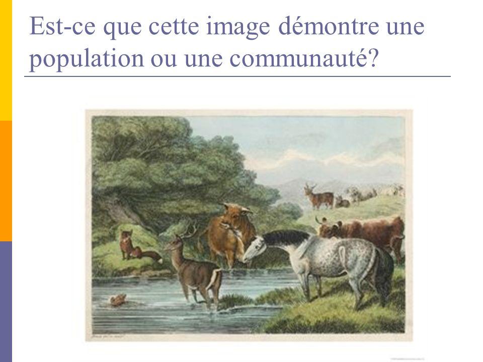 Est-ce que cette image démontre une population ou une communauté?