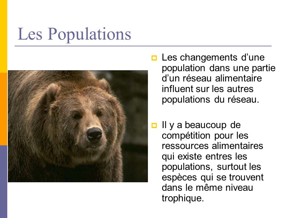 Les Populations Les changements dune population dans une partie dun réseau alimentaire influent sur les autres populations du réseau. Il y a beaucoup
