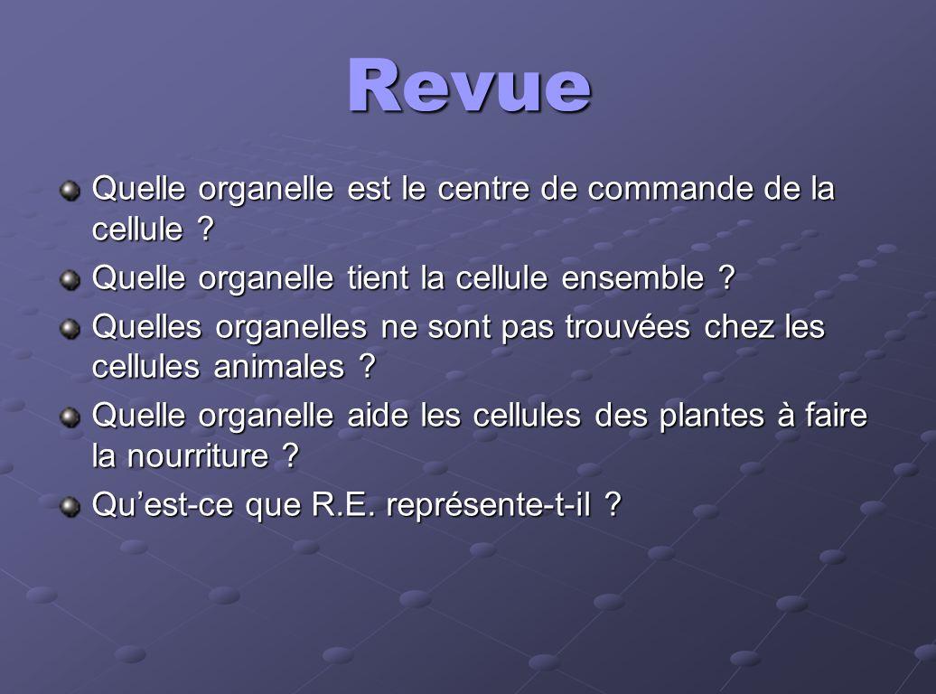 Revue Quelle organelle est le centre de commande de la cellule ? Quelle organelle tient la cellule ensemble ? Quelles organelles ne sont pas trouvées