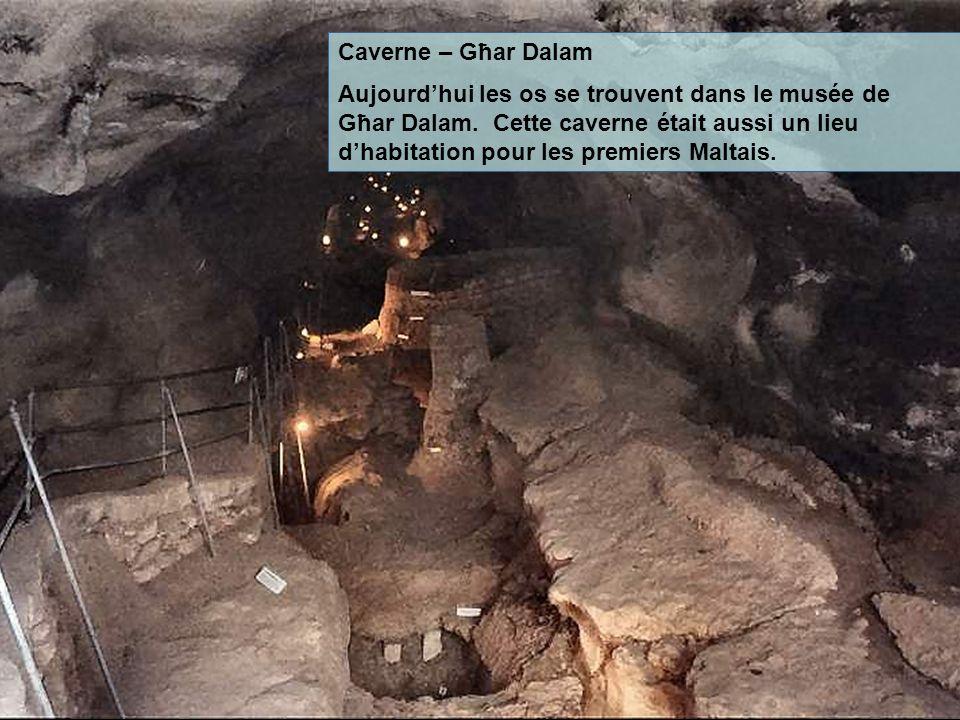 Caverne – Għar Dalam Aujourdhui les os se trouvent dans le musée de Għar Dalam. Cette caverne était aussi un lieu dhabitation pour les premiers Maltai