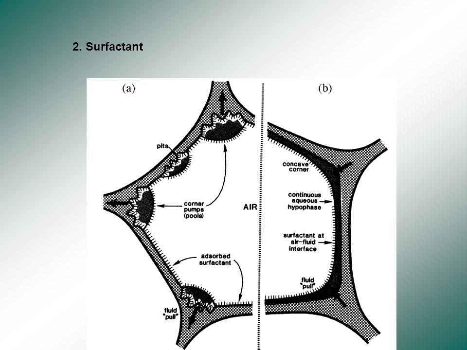 1.cyto-squelette alvéolaire avec fibres dactine et de collagène
