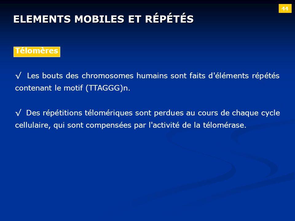 44 ELEMENTS MOBILES ET RÉPÉTÉS Télomères Les bouts des chromosomes humains sont faits d'éléments répétés contenant le motif (TTAGGG)n. Des répétitions