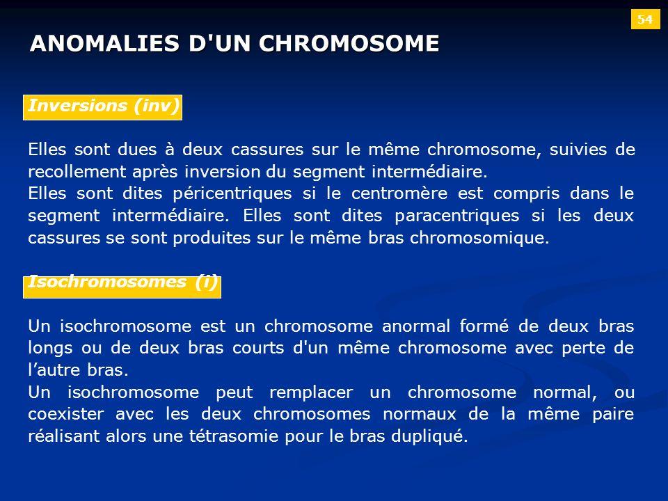 54 ANOMALIES D'UN CHROMOSOME Inversions (inv) Elles sont dues à deux cassures sur le même chromosome, suivies de recollement après inversion du segmen