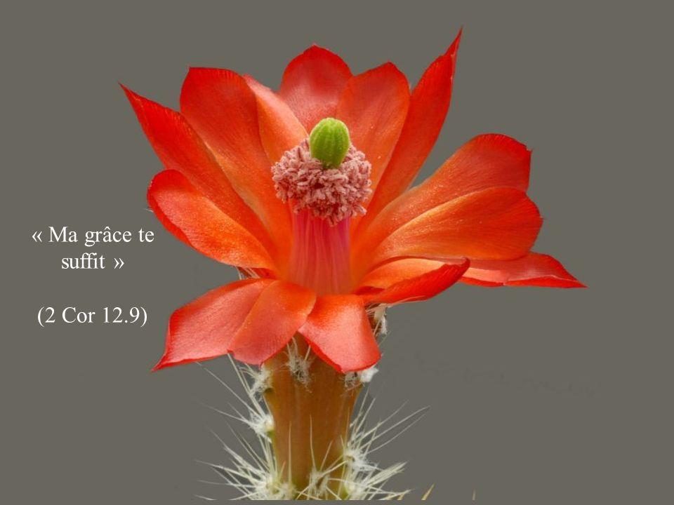 « Ma grâce te suffit » (2 Cor 12.9)