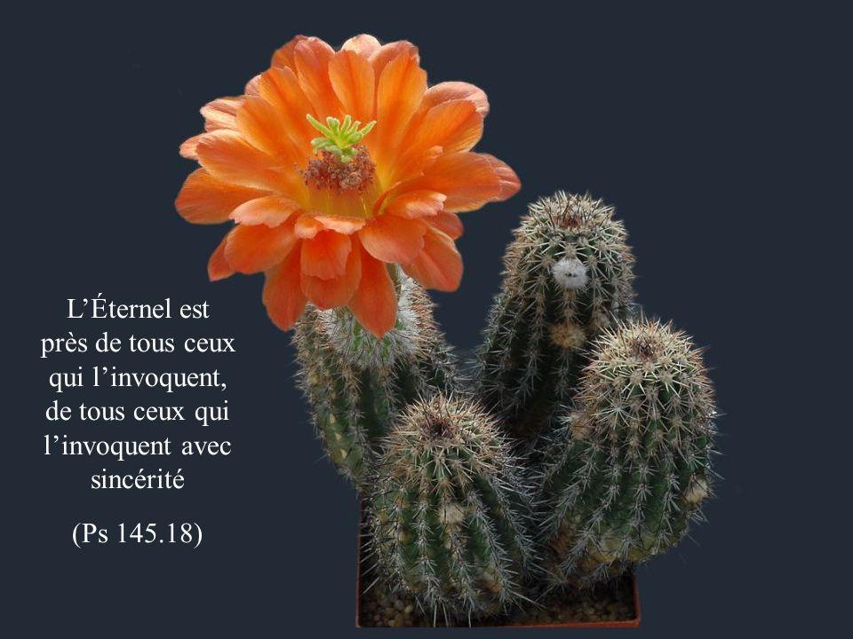 LÉternel est près de tous ceux qui linvoquent, de tous ceux qui linvoquent avec sincérité (Ps 145.18)