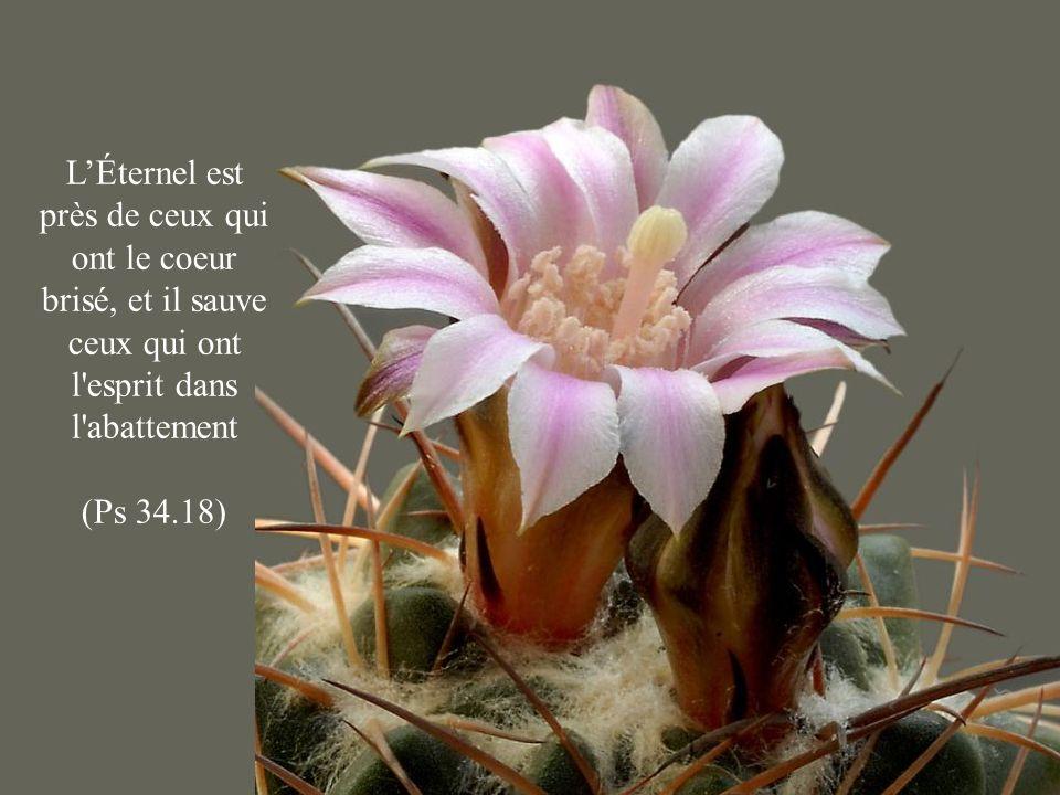 LÉternel est près de ceux qui ont le coeur brisé, et il sauve ceux qui ont l'esprit dans l'abattement (Ps 34.18)