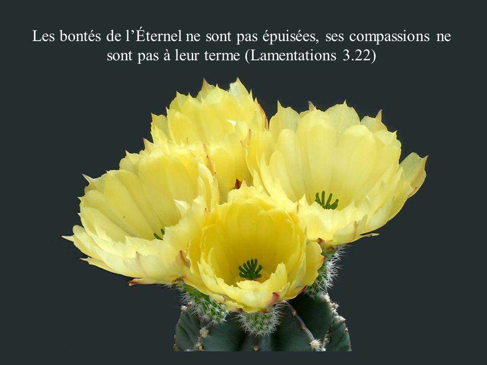 Les bontés de lÉternel ne sont pas épuisées, ses compassions ne sont pas à leur terme (Lamentations 3.22)
