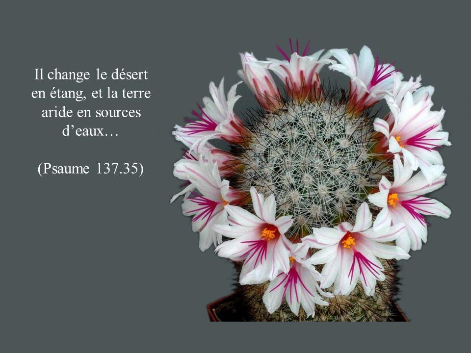 Il change le désert en étang, et la terre aride en sources deaux… (Psaume 137.35)