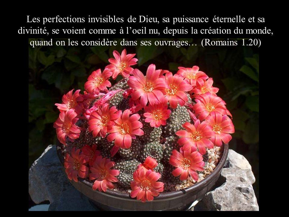 Les perfections invisibles de Dieu, sa puissance éternelle et sa divinité, se voient comme à loeil nu, depuis la création du monde, quand on les consi