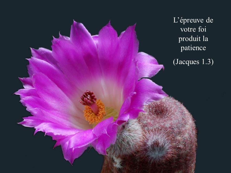Le lendemain, lorsque Moïse entra dans la tente du témoignage, voici, la verge dAaron, pour la maison de Lévi, avait fleuri, elle avait poussé des boutons, produit des fleurs, et mûri des amandes (Nombres 17.8)