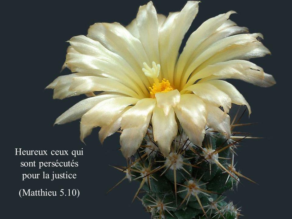 Heureux ceux qui sont persécutés pour la justice (Matthieu 5.10)