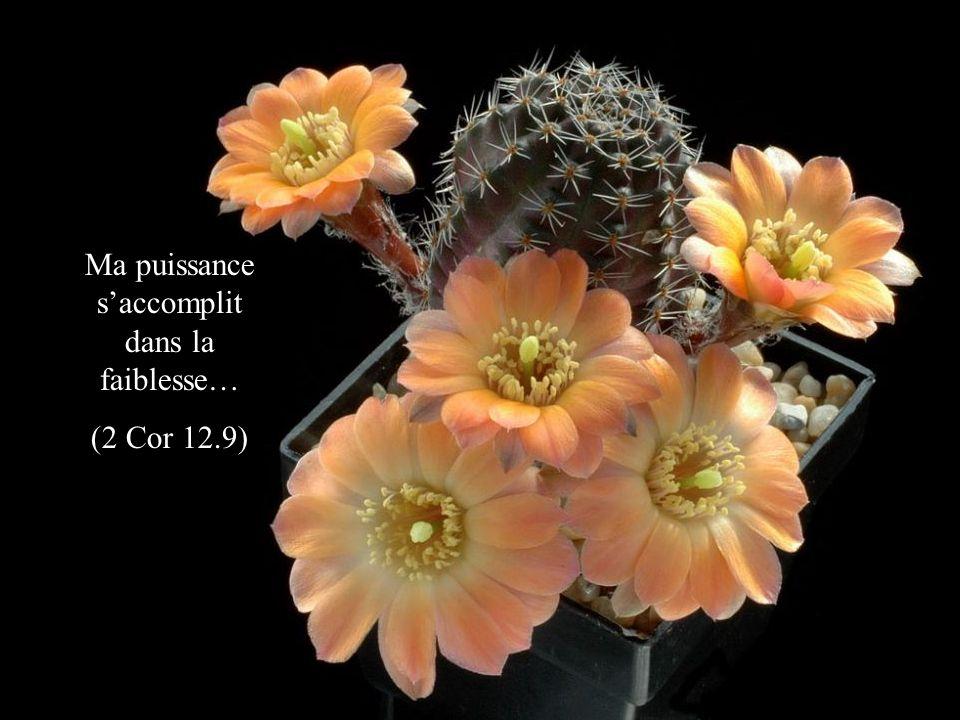 Quand je suis faible, cest alors que je suis fort… (2 Cor 12.10)