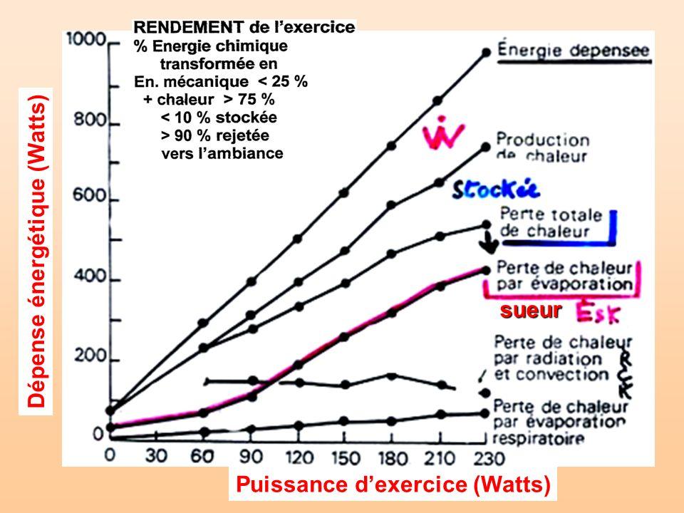 Dépense énergétique (Watts) Puissance dexercice (Watts) sueur