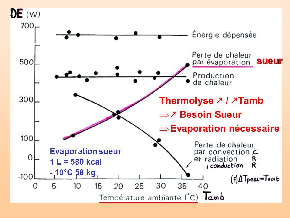 sueur Thermolyse / Tamb Besoin Sueur Evaporation nécessaire Evaporation sueur 1 L = 580 kcal - 10°C 58 kg