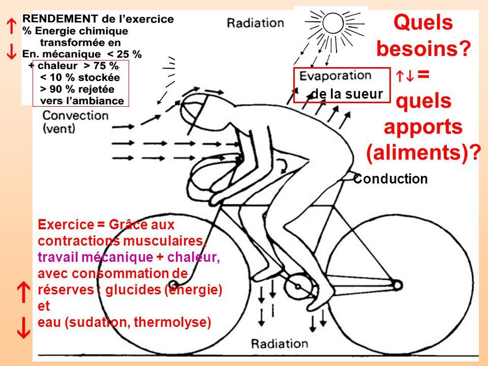 Conduction de la sueur Exercice = Grâce aux contractions musculaires, travail mécanique + chaleur, avec consommation de réserves : glucides (énergie)