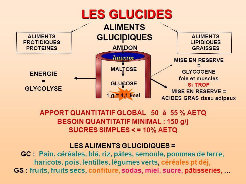 LES GLUCIDES ALIMENTS GLUCIDIQUES ALIMENTS PROTIDIQUES PROTEINES AMIDON MISE EN RESERVE = GLYCOGENE foie et muscles Si TROP MISE EN RESERVE = ACIDES G