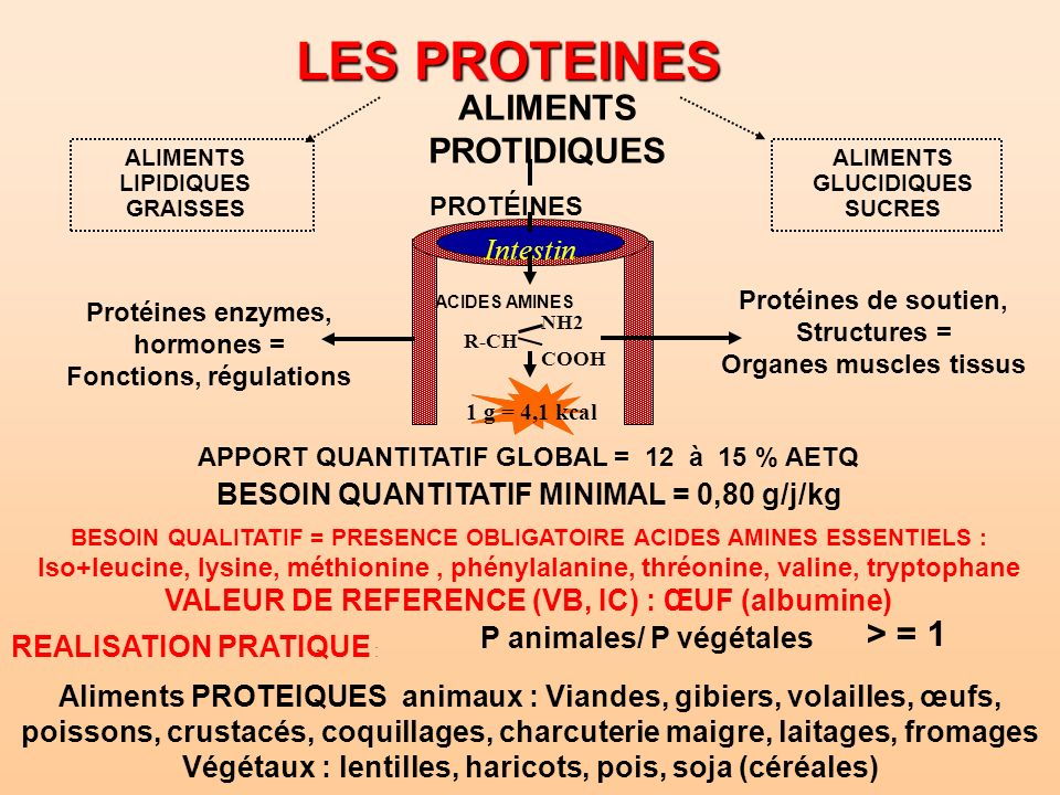 LES PROTEINES ALIMENTS PROTIDIQUES ALIMENTS LIPIDIQUES GRAISSES PROTÉINES Protéines de soutien, Structures = Organes muscles tissus Protéines enzymes,